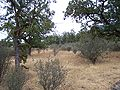Table Rock Oak Savanna.jpg