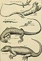 Tableau encyclopédique et méthodique des trois règnes de la nature - dédié et présenté a M. Necker, ministre d'État, and directeur général des Finances (1789) (14779289841).jpg