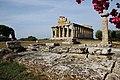 Tempio di Atena -Paestum.jpg