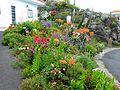 Teneriffa - El Tanque – Herrliche Blütenpracht an der TF-421 - panoramio.jpg