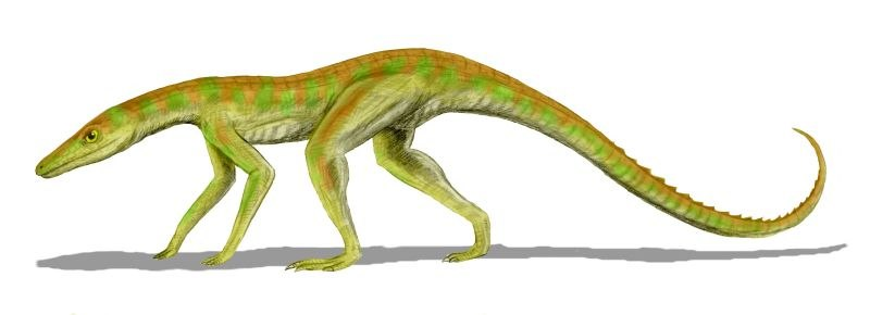 Terrestrisuchus BW