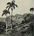 The American Museum journal (c1900-(1918)) (18160275275).jpg