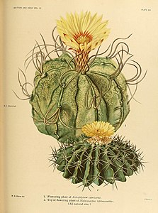 The Cactaceae (Plate XXI) (8569090036).jpg