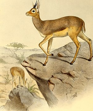The book of antelopes (1894) (14595743289).jpg