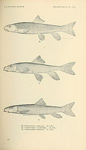 The fishes of North and Middle America (Pl. XXXI) (7983309822).jpg