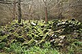 The ruins of Craigend Cottage - geograph.org.uk - 772852.jpg