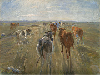 Long Shadows. Cattle on the Island of Saltholm