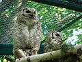 Tierpark 08 05 03a.jpg