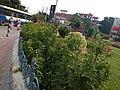 Tirupati garden.jpg