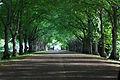 Toila-Oru Park 02.jpg