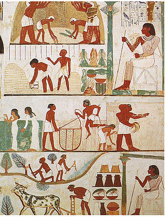 A tomb relief depicts workers plowing the fields, harvesting the crops, and threshing the grain under the direction of an overseer, painting in the tomb of Nakht. Tomb of Nakht (2).jpg