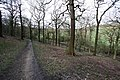 Track in Stony Cliffe Wood - geograph.org.uk - 738121.jpg