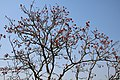 Tree & Sky of Saatchori National Park, Hobigonj, Sylhet, Bangladesh.jpg