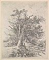 Tree Trunks and Lane MET DP822050.jpg