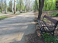 Tree avenue of London Plane in Hajd park, Belgrade 1.jpg