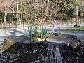 Tree stump (1).JPG