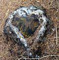 Tree stump heart.jpg