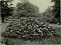 Trees and shrubs, hardy in the British isles (1914) (14758565826).jpg