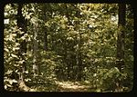 Trees in a reforestation project1a34436v.jpg