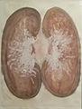 Tricot 2001 - The humzn body (anatomy) 002.jpg
