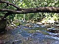Trilha para Cachoeira Grande de Muriqui - RJ - Brasil - panoramio.jpg