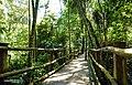 Trilha suspensa sobre a mata - Jardim Botânico.jpg