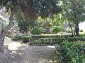 Triq Sa Maison, Il-Furjana, Malta - panoramio (3).jpg