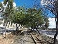 Triq l-Imdina, Ħ'Attard, Malta - panoramio (15).jpg