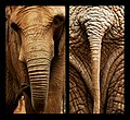 Trunk and Tail (2539175643).jpg