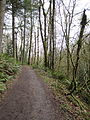 Tryon Creek State Natural Area, trail.JPG