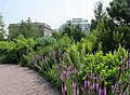 U.S. Botanic Garden in July (23169150273).jpg