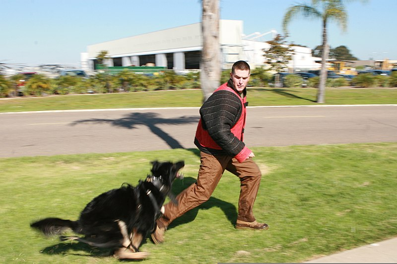 how to become a military dog handler