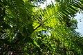 USAID Measuring Impact Conservation Enterprise Retrospective (Philippines; Nagkakaisang Tribu ng Palawan) (39395774245).jpg