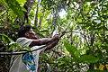 USAID Measuring Impact Conservation Enterprise Retrospective (Philippines; Nagkakaisang Tribu ng Palawan) (39395897115).jpg