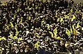 US Navy 031206-N-9693M-513 The U.S. Naval Academy Brigade of Midshipmen cheers for their football team during the 104th Army Navy Game.jpg