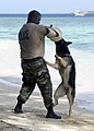 US Navy 040316-N-7293M-171 Master at Arms Seaman Renthal Haynes, of Houston, Texas, protects his arm with a wrap as he acts as a training target for a Military Working Dog.jpg