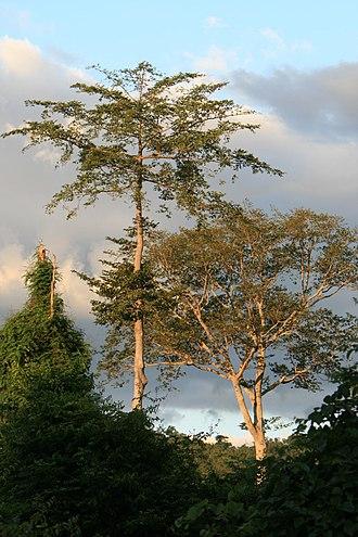 Udzungwa Mountains National Park - Image: Udzungwa Mountains National Park 1