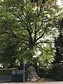 Ummelner Eiche Zirbelstraße West.jpg