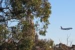 United Boeing 737 flying over San Diego Zoo.jpg