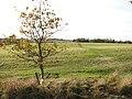 Unmarked path traversing hay meadow - geograph.org.uk - 1588331.jpg