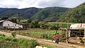Vía principal y conuco. Sector Mesa Arriba,Trujillo- Venezuela.jpg
