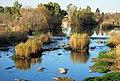 Vaal River Parys, Weir 01.jpg