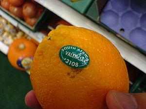 Valencia orange - Valencia orange