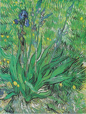 Butterflies (Van Gogh series) - Image: Van Gogh Iris