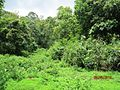 Vazhachal Reserve Forest - panoramio (5).jpg