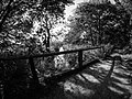 Vemmetofte skov - panoramio (1).jpg