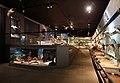 Verona, museo civico di storia naturale, sale, zoologia 04.jpg