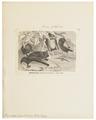 Vespertilio daubentonii - 1700-1880 - Print - Iconographia Zoologica - Special Collections University of Amsterdam - UBA01 IZ20800129.tif