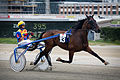 Vienna - Trotting racer at the Krieau - 6608.jpg