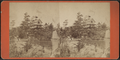 View of Acadia, from Summer Land, by A. C. McIntyre.png